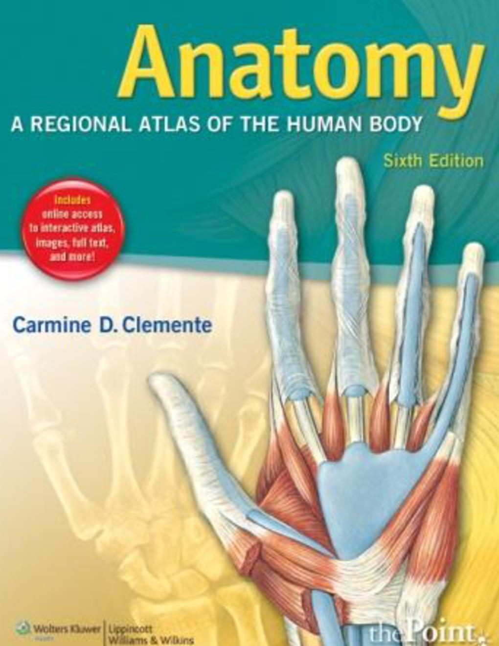 Anatomy A Regional Atlas Of The Human Body 6th Ed C Clemente