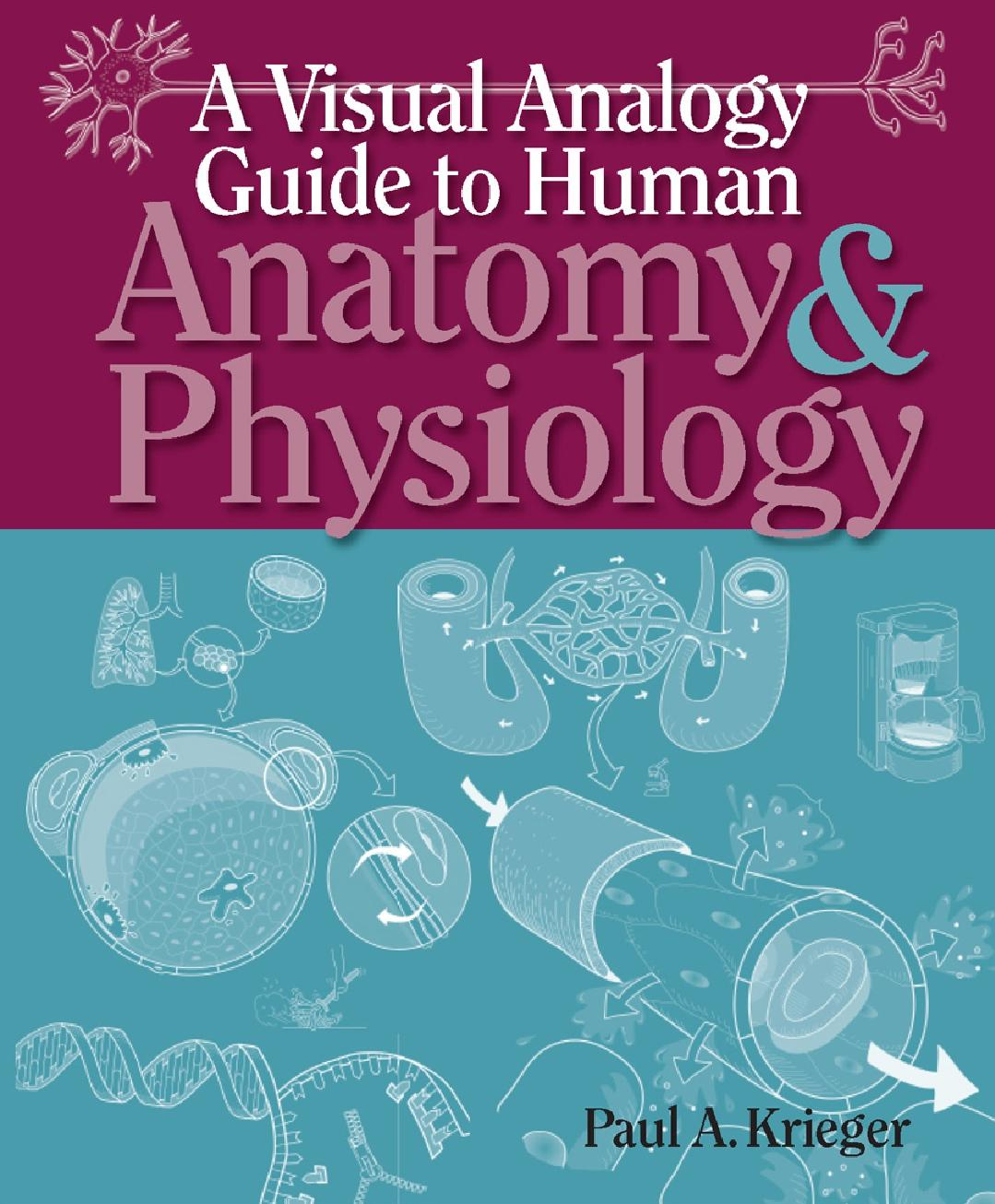 A Visual Analogy Guide To Human Anatomy And Physiology P Krieger